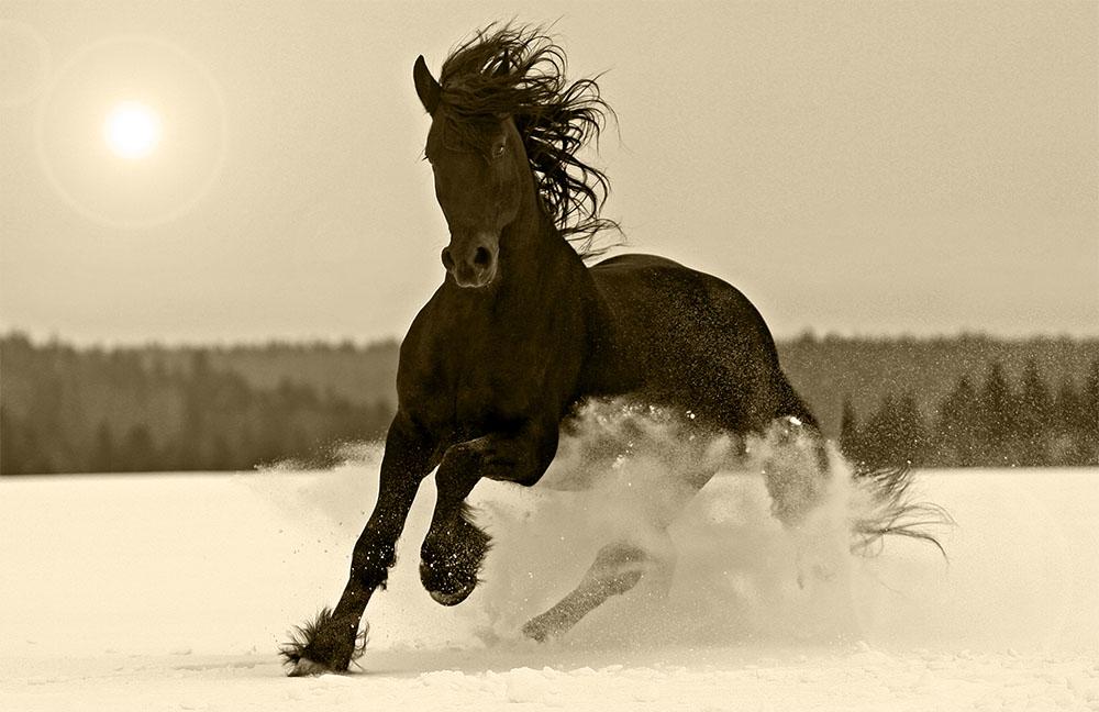 pferd© Nastenok - Sephia